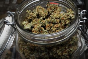 Low THC Cannabis Available in Florida - Voting on Medical Marijuana in November